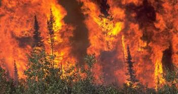 2004-Wildlandfire2nd85-28
